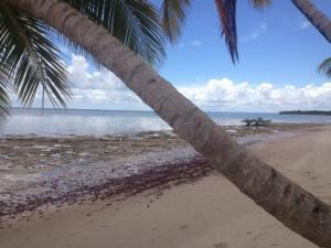 Moreré - Bahia